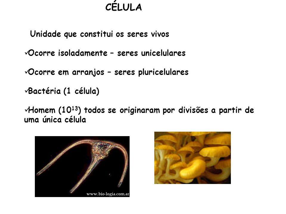 CÉLULA Ocorre isoladamente – seres unicelulares