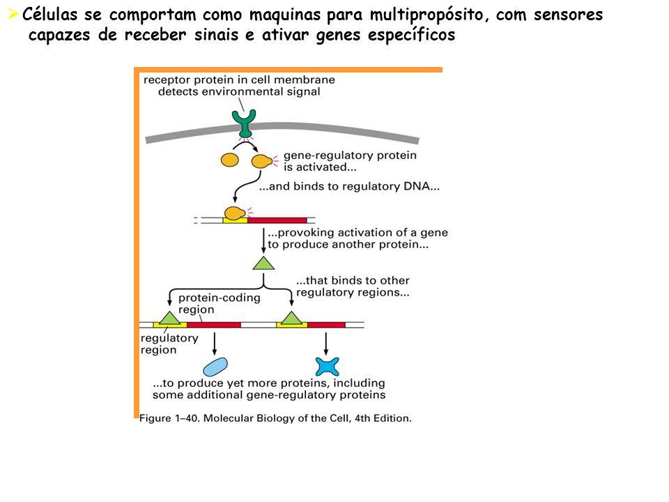 Células se comportam como maquinas para multipropósito, com sensores