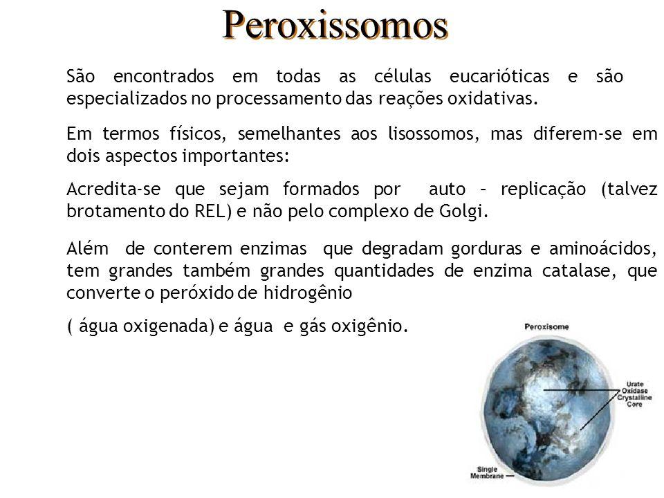 Peroxissomos São encontrados em todas as células eucarióticas e são especializados no processamento das reações oxidativas.