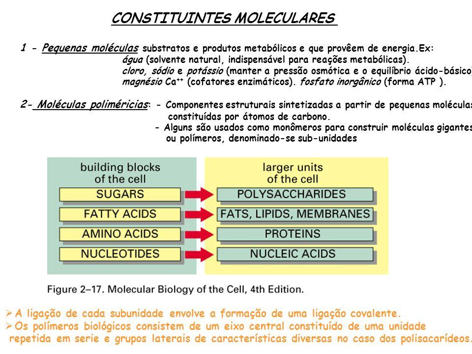 CONSTITUINTES MOLECULARES