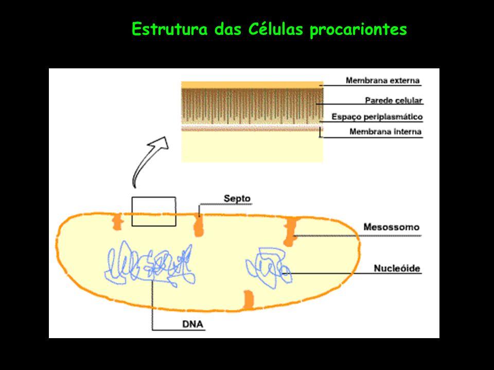 Estrutura das Células procariontes