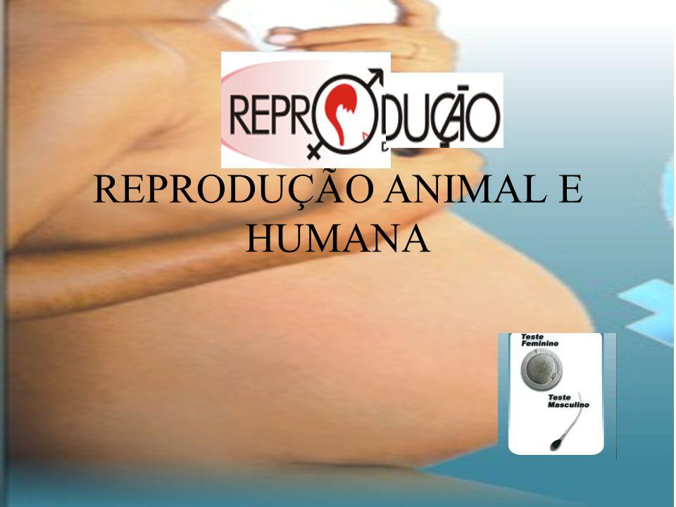 REPRODUÇÃO ANIMAL E HUMANA