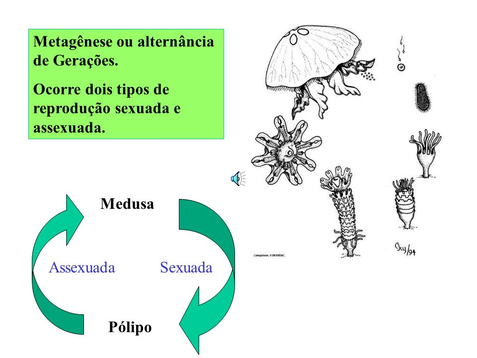Metagênese ou alternância de Gerações.