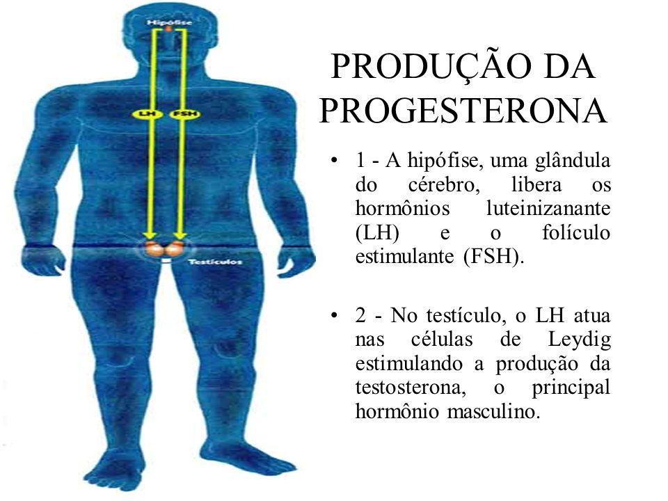 PRODUÇÃO DA PROGESTERONA