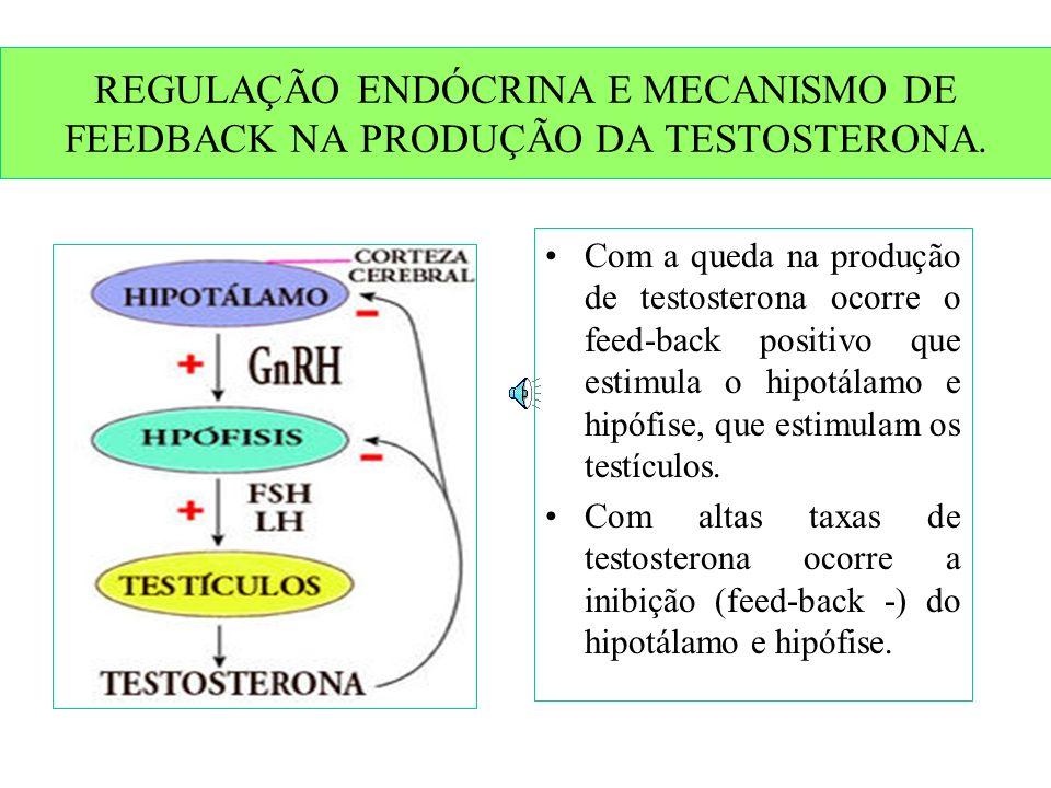 REGULAÇÃO ENDÓCRINA E MECANISMO DE FEEDBACK NA PRODUÇÃO DA TESTOSTERONA.