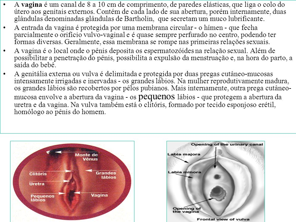 A vagina é um canal de 8 a 10 cm de comprimento, de paredes elásticas, que liga o colo do útero aos genitais externos. Contém de cada lado de sua abertura, porém internamente, duas glândulas denominadas glândulas de Bartholin, que secretam um muco lubrificante.