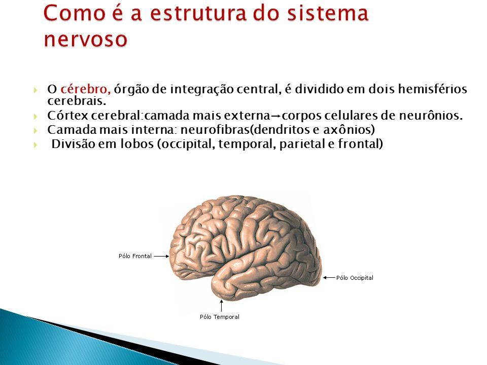 Como é a estrutura do sistema nervoso