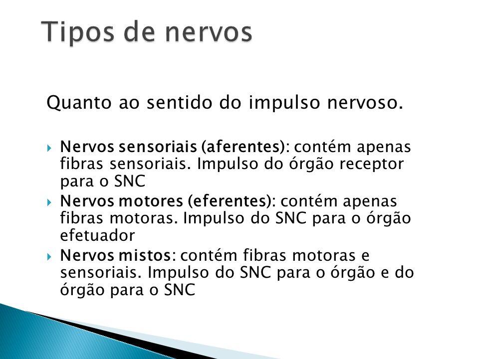 Tipos de nervos Quanto ao sentido do impulso nervoso.