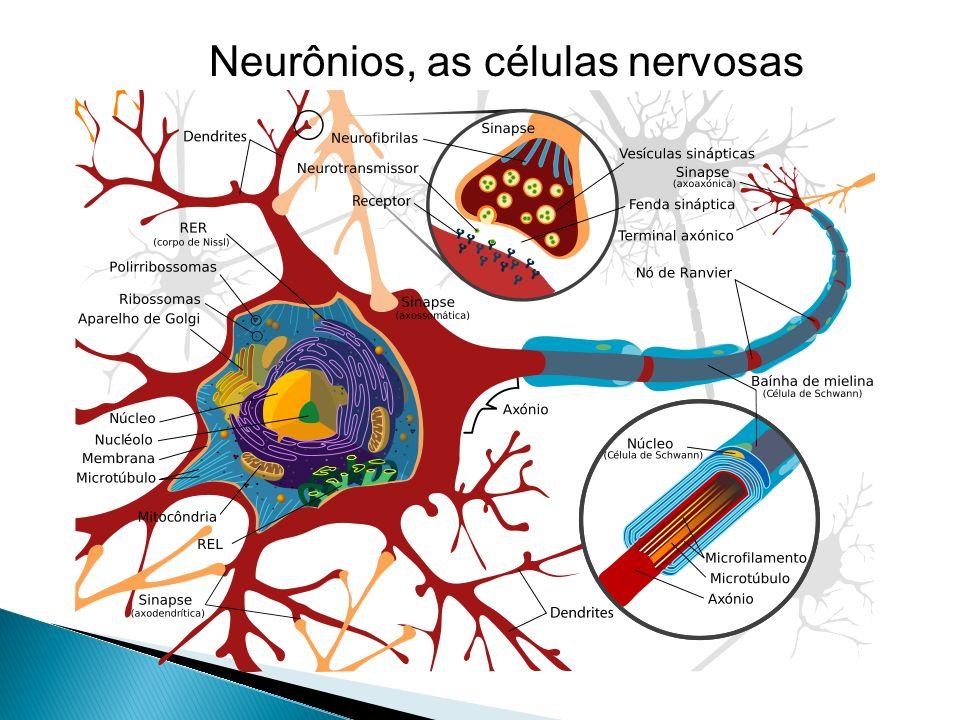 Neurônios, as células nervosas