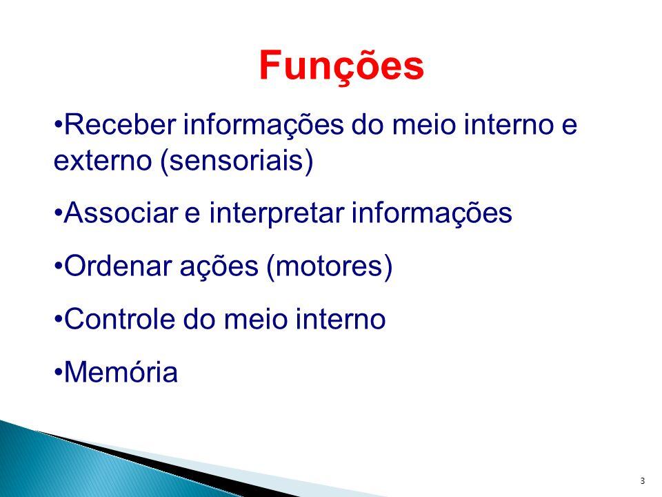 Funções Receber informações do meio interno e externo (sensoriais)
