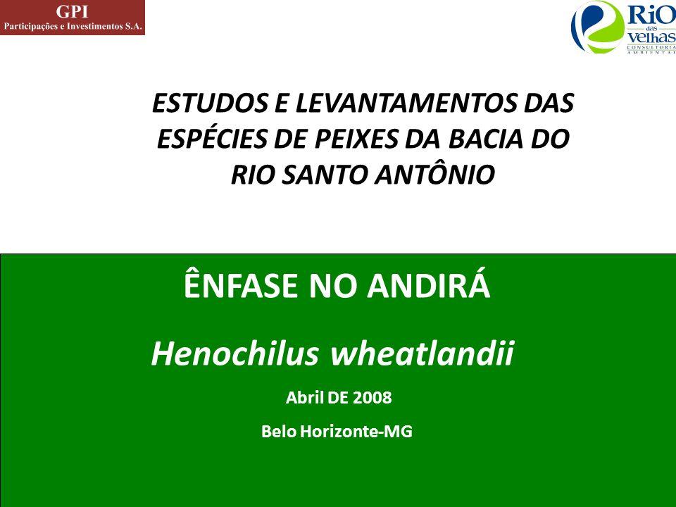 ÊNFASE NO ANDIRÁ Henochilus wheatlandii