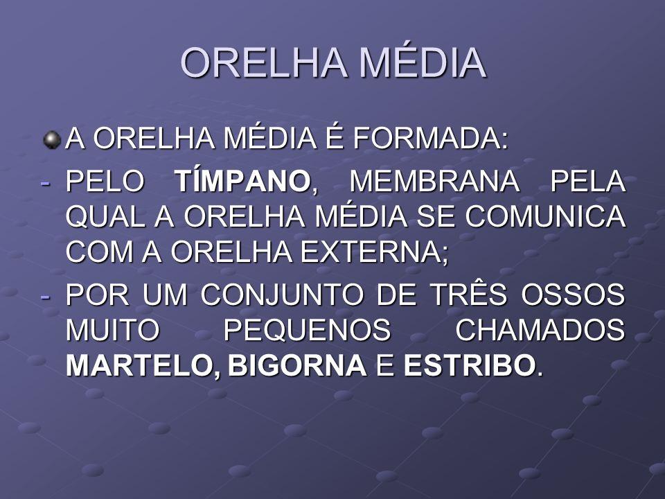 ORELHA MÉDIA A ORELHA MÉDIA É FORMADA: