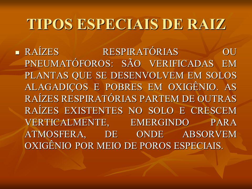TIPOS ESPECIAIS DE RAIZ