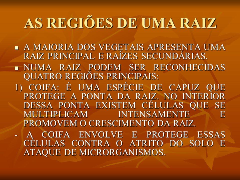 AS REGIÕES DE UMA RAIZ A MAIORIA DOS VEGETAIS APRESENTA UMA RAIZ PRINCIPAL E RAÍZES SECUNDÁRIAS.