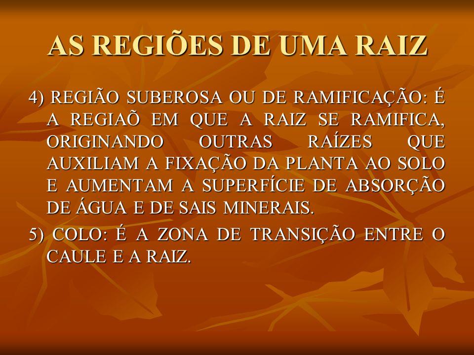 AS REGIÕES DE UMA RAIZ