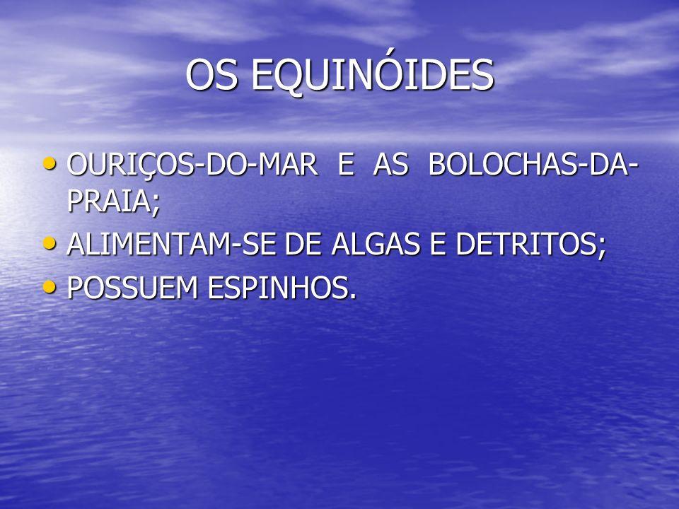OS EQUINÓIDES OURIÇOS-DO-MAR E AS BOLOCHAS-DA-PRAIA;