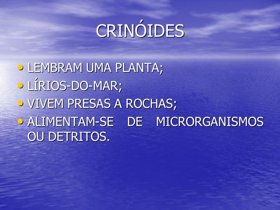 CRINÓIDES LEMBRAM UMA PLANTA; LÍRIOS-DO-MAR; VIVEM PRESAS A ROCHAS;