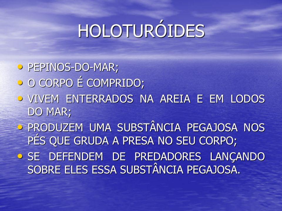 HOLOTURÓIDES PEPINOS-DO-MAR; O CORPO É COMPRIDO;