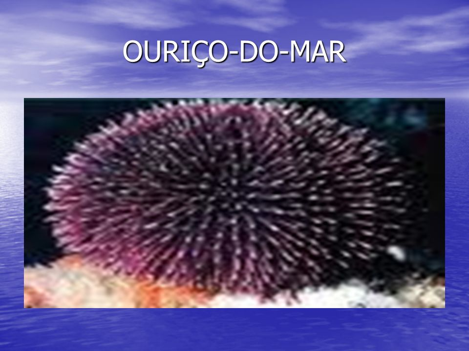 OURIÇO-DO-MAR