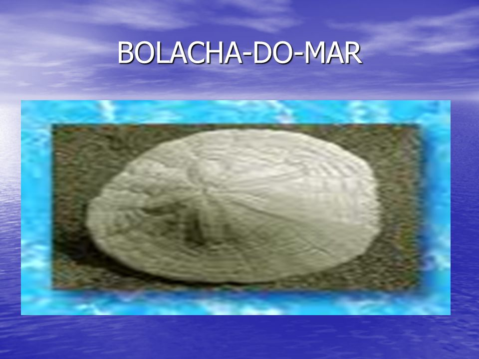 BOLACHA-DO-MAR