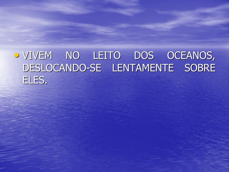 VIVEM NO LEITO DOS OCEANOS, DESLOCANDO-SE LENTAMENTE SOBRE ELES.