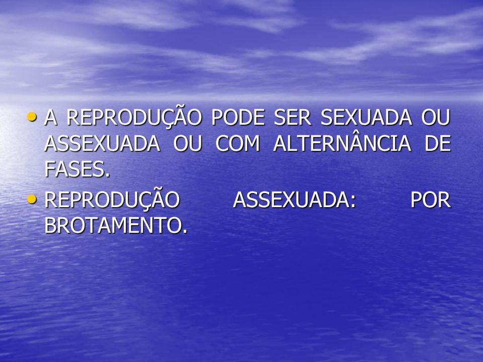 A REPRODUÇÃO PODE SER SEXUADA OU ASSEXUADA OU COM ALTERNÂNCIA DE FASES.