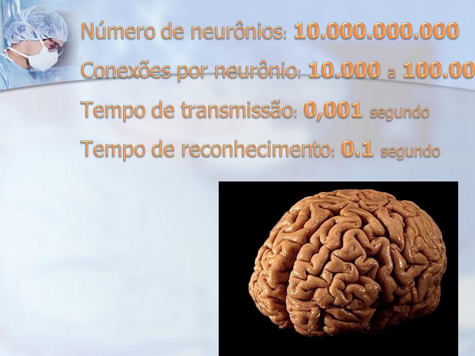 Conexões por neurônio: 10.000 a 100.000