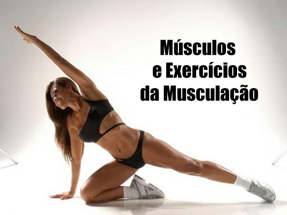 Músculos e Exercícios da Musculação