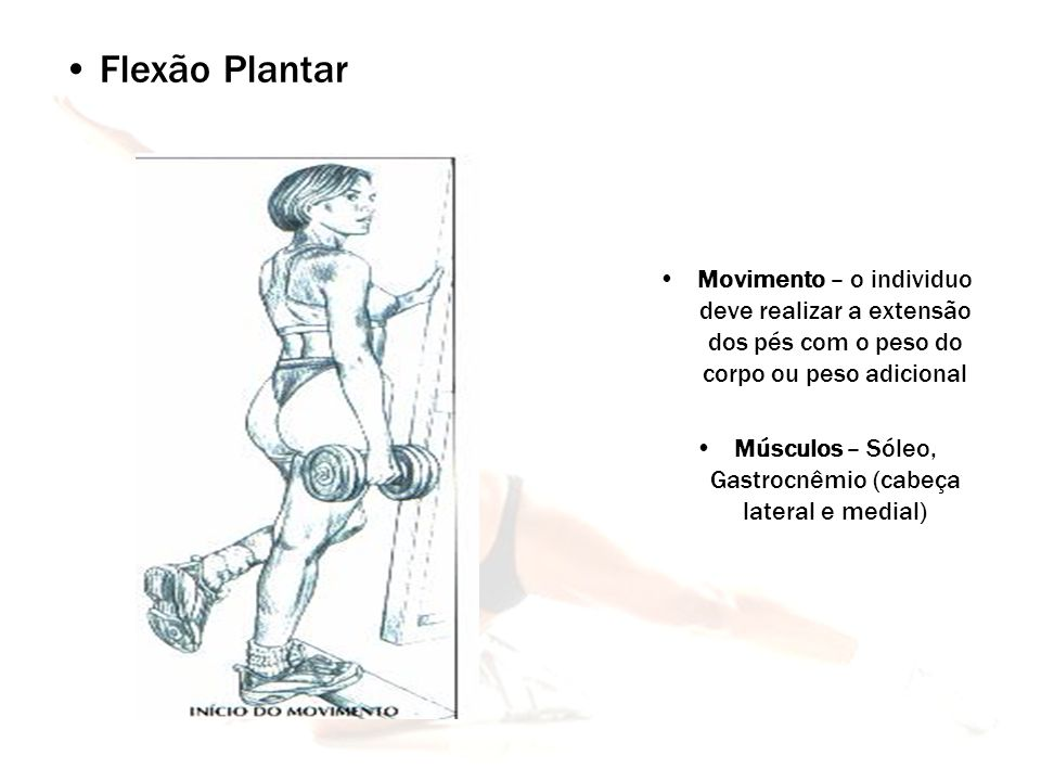 Músculos – Sóleo, Gastrocnêmio (cabeça lateral e medial)
