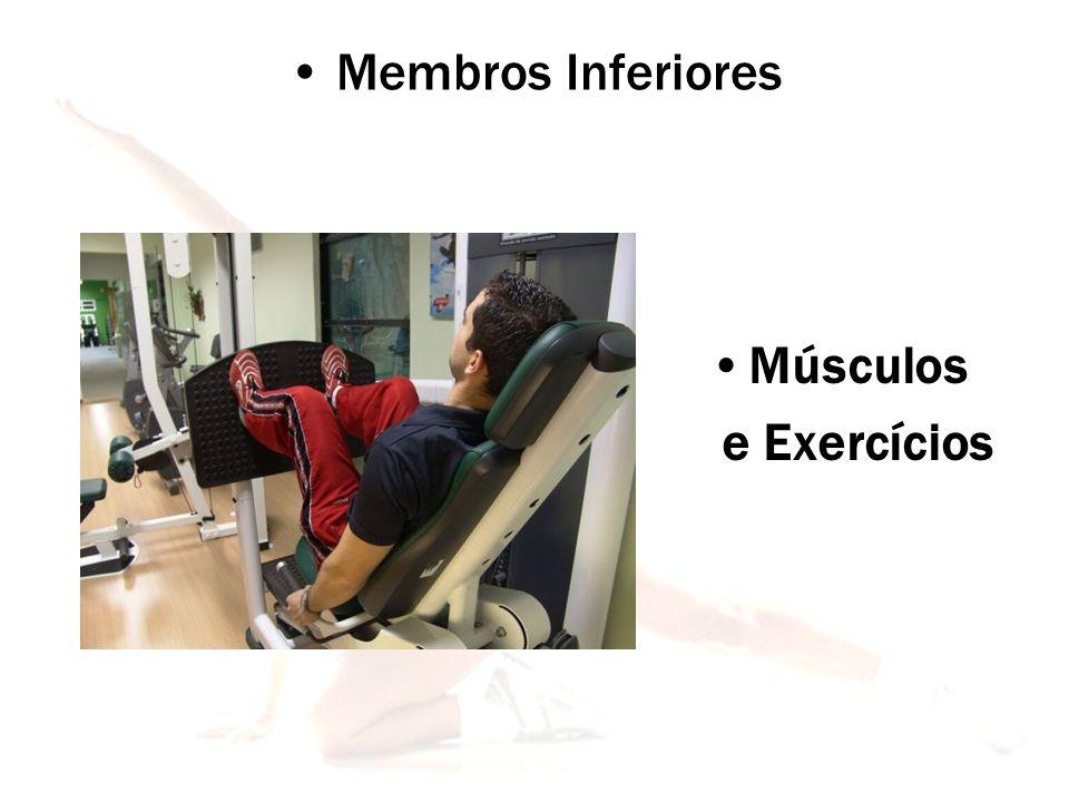Membros Inferiores Músculos e Exercícios