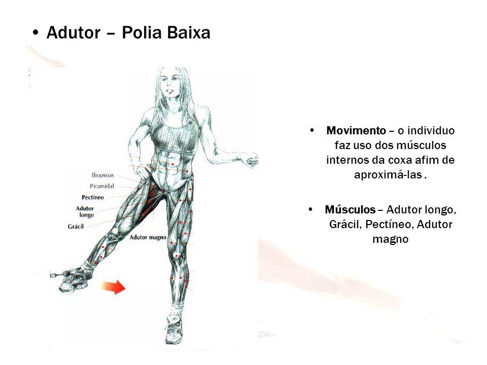 Músculos – Adutor longo, Grácil, Pectíneo, Adutor magno