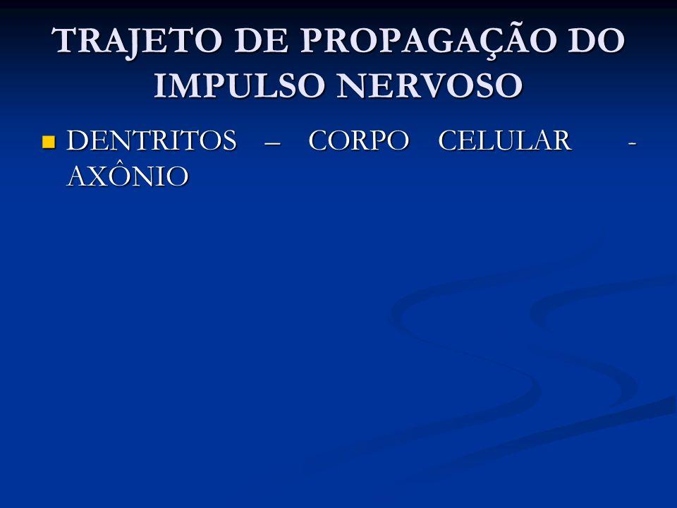TRAJETO DE PROPAGAÇÃO DO IMPULSO NERVOSO