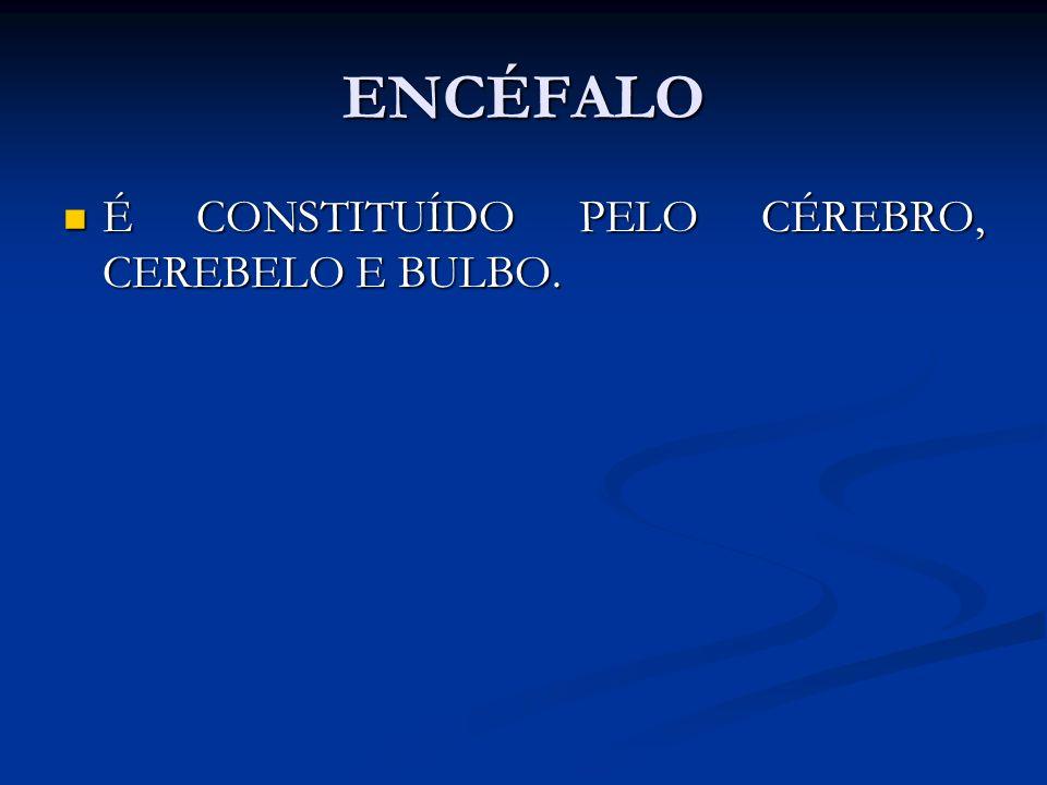 ENCÉFALO É CONSTITUÍDO PELO CÉREBRO, CEREBELO E BULBO.