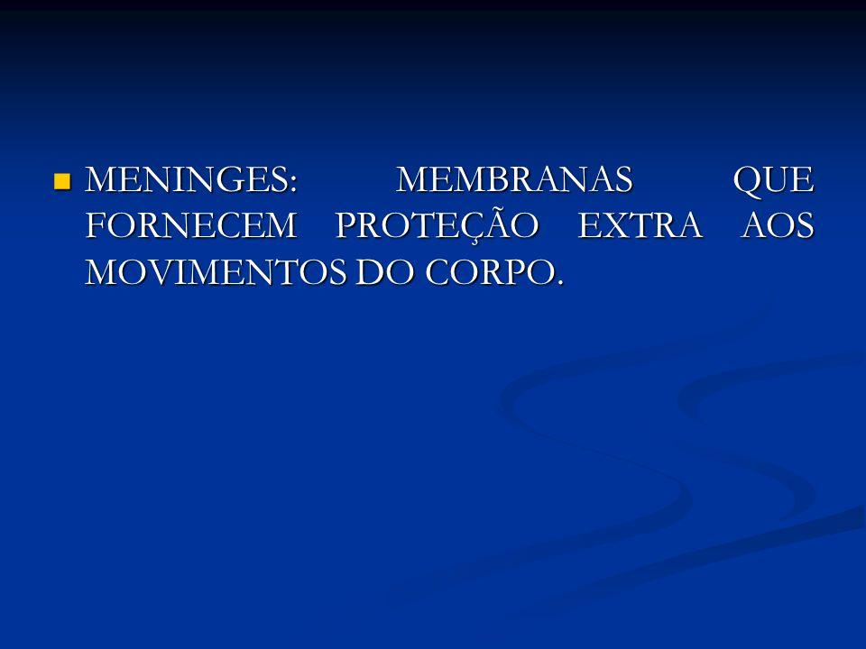 MENINGES: MEMBRANAS QUE FORNECEM PROTEÇÃO EXTRA AOS MOVIMENTOS DO CORPO.
