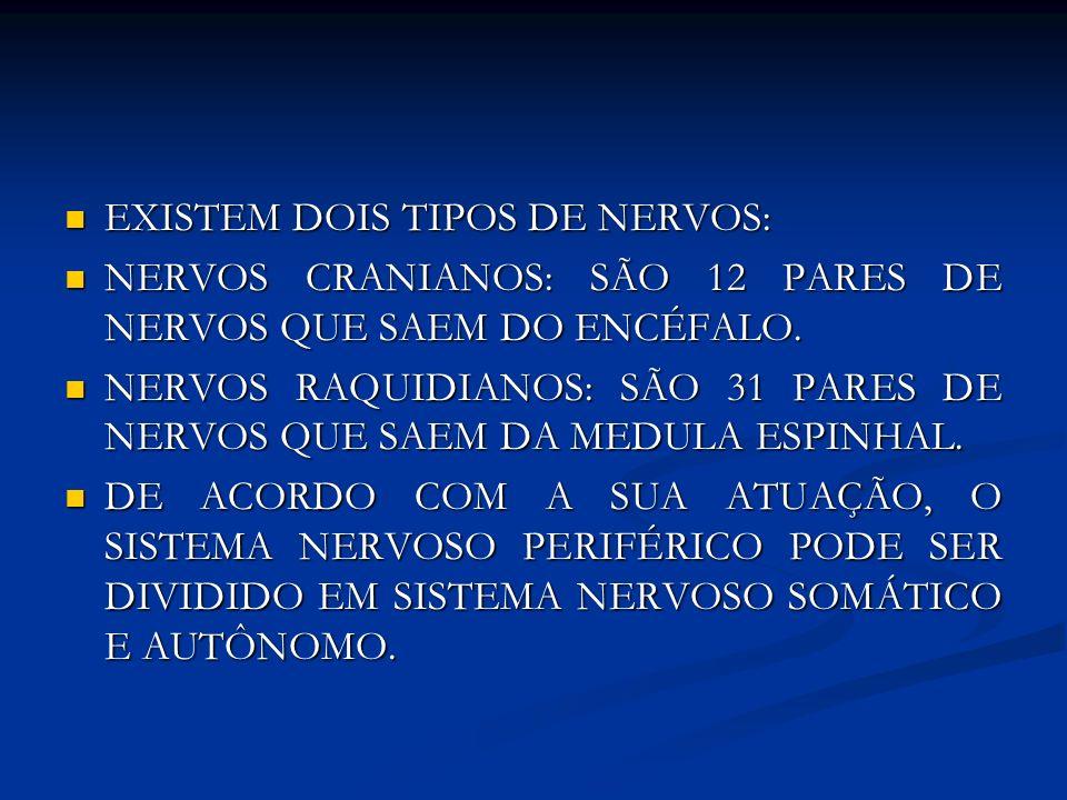 EXISTEM DOIS TIPOS DE NERVOS: