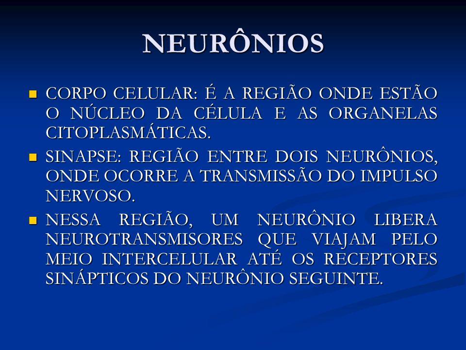 NEURÔNIOS CORPO CELULAR: É A REGIÃO ONDE ESTÃO O NÚCLEO DA CÉLULA E AS ORGANELAS CITOPLASMÁTICAS.