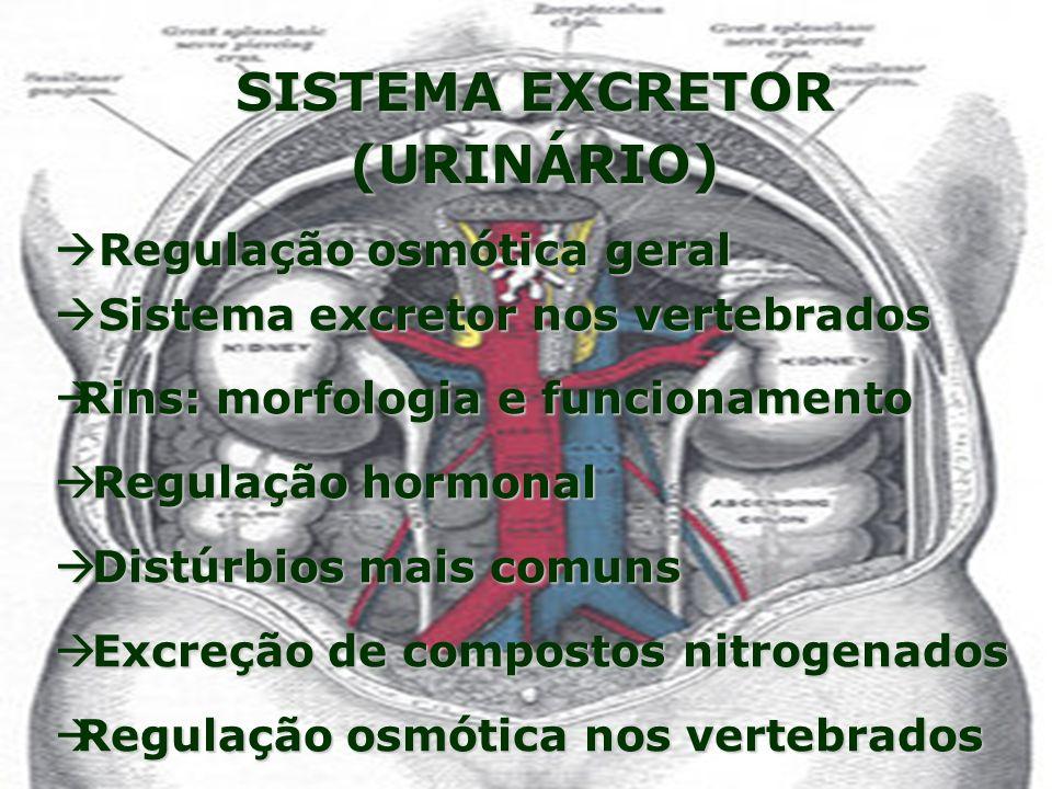 SISTEMA EXCRETOR (URINÁRIO)