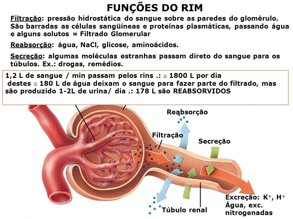 FUNÇÕES DO RIM Filtração.