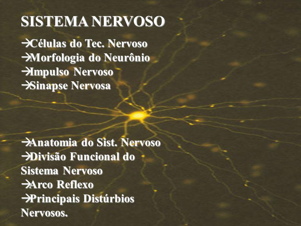 SISTEMA NERVOSO Células do Tec. Nervoso Morfologia do Neurônio