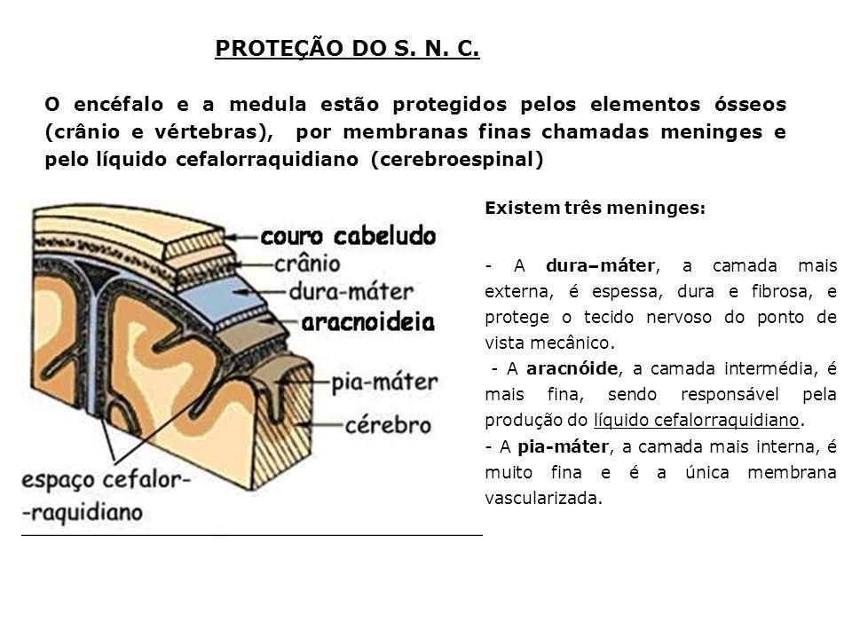 PROTEÇÃO DO S. N. C.