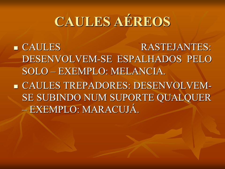 CAULES AÉREOS CAULES RASTEJANTES: DESENVOLVEM-SE ESPALHADOS PELO SOLO – EXEMPLO: MELANCIA.
