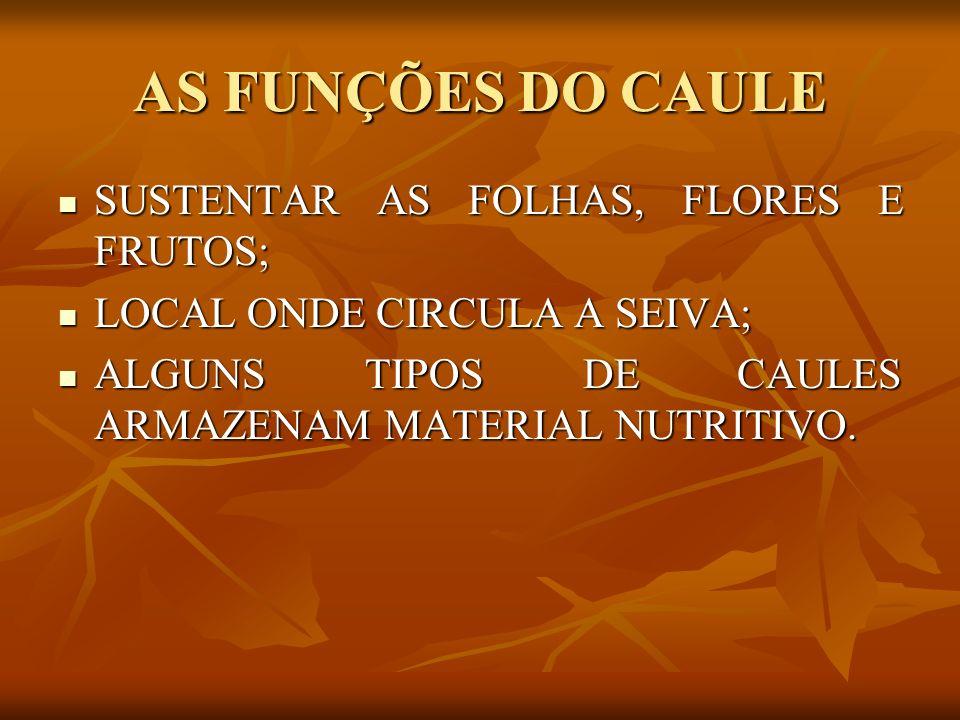 AS FUNÇÕES DO CAULE SUSTENTAR AS FOLHAS, FLORES E FRUTOS;
