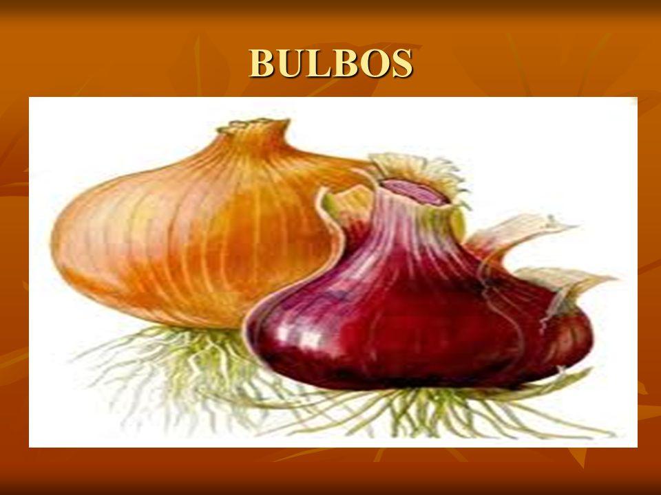 BULBOS