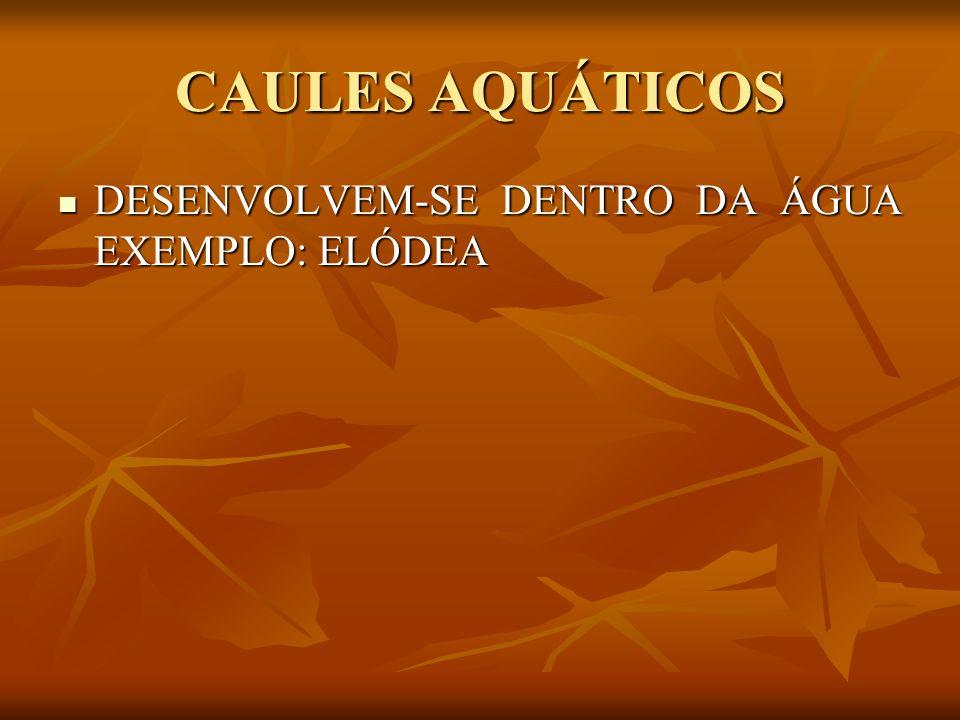 CAULES AQUÁTICOS DESENVOLVEM-SE DENTRO DA ÁGUA EXEMPLO: ELÓDEA