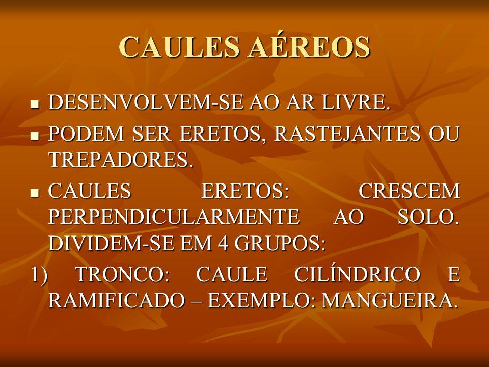 CAULES AÉREOS DESENVOLVEM-SE AO AR LIVRE.
