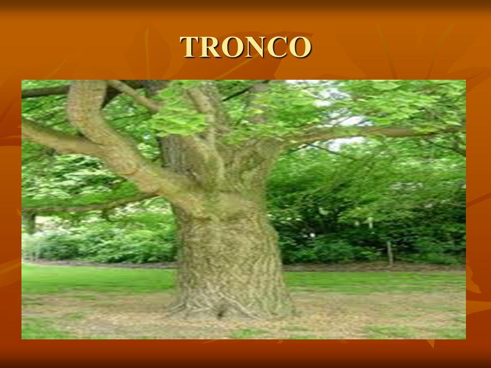 TRONCO