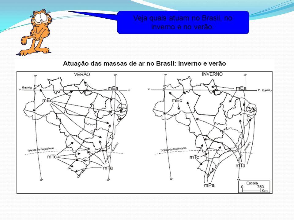 Veja quais atuam no Brasil, no inverno e no verão.