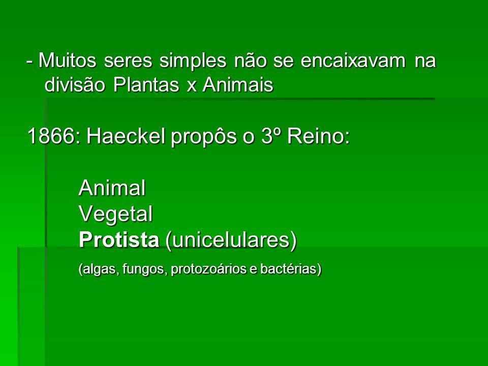 A classificação dos microrganismos (Taxonomia)
