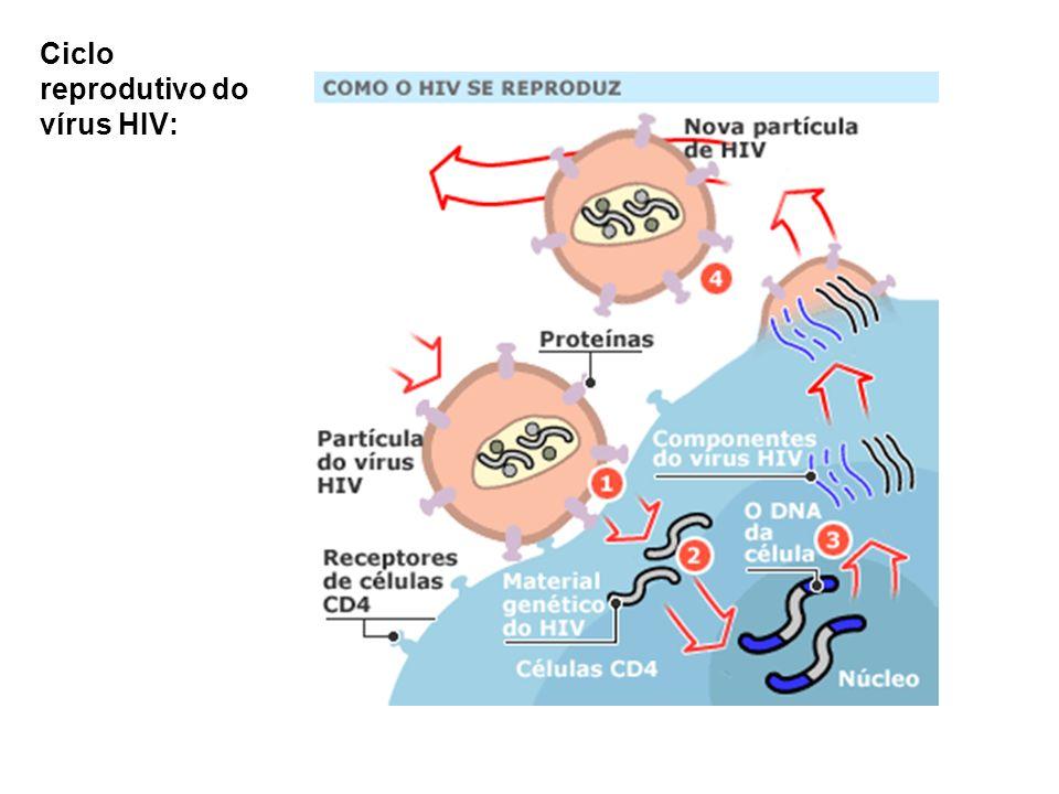 Ciclo reprodutivo do vírus HIV: