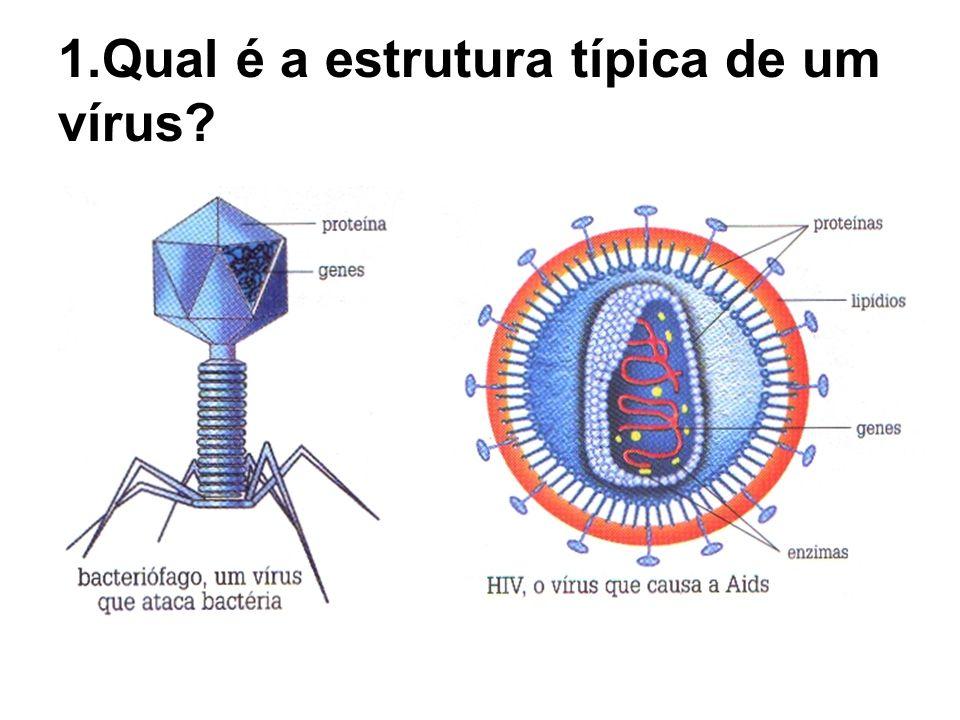 1.Qual é a estrutura típica de um vírus